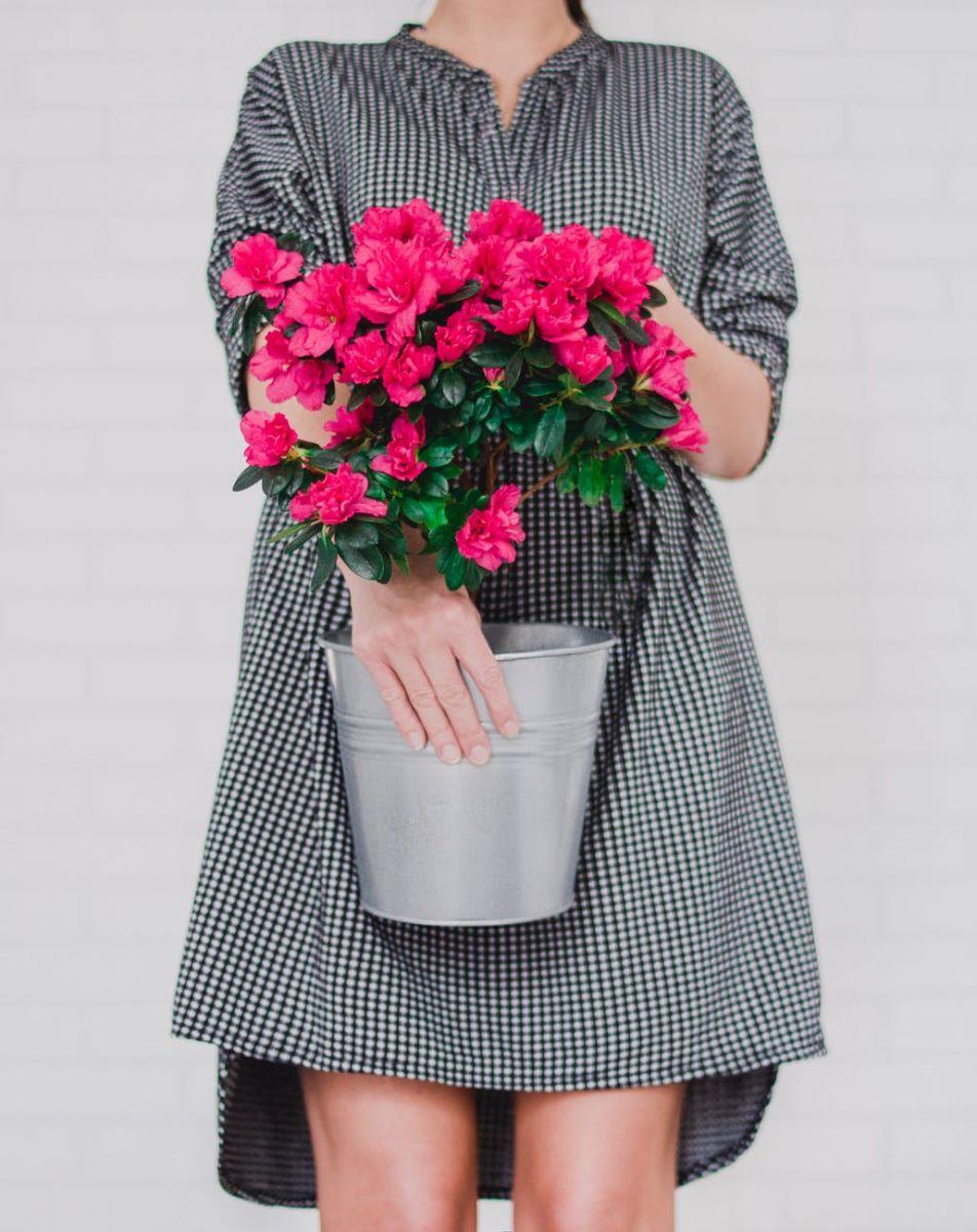 Devojka drži saksiju sa prolećnim cvećem boje ciklame